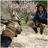 O Reino Proibido : Foto Jackie Chan