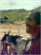 O Boi Misterioso e o Vaqueiro Menino