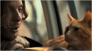 Saiu o trailer legendado da adaptação Um Gato de Rua Chamado Bob
