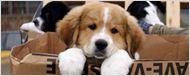 Quatro Vidas de um Cachorro: Overdose de fofura em novo vídeo legendado