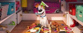 Pets - A Vida Secreta dos Bichos mostra os animais fazendo a festa em comercial do Super Bowl