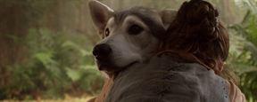 Game of Thrones: Novas evidências sugerem reencontro entre Arya e Nymeria na sétima temporada